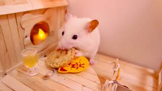 Hamsters – A Cute Hamster And Funny Hamster Videos Compilation