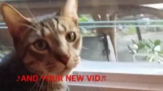 YOUTUBE CAT SONG WITH LYRICS by Cute Cats Kwazi and Uli