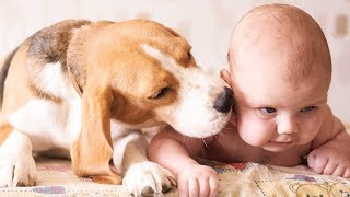 Cute Baby Plays With Dogs – Funny Baby And Dog Compilation