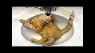TRY NOT TO LAUGH OR GRIN with Funny Cat's Life  –  Cats Fun and Fails Videos