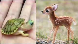 Cute baby animals Videos Compilation cute moment of the animals – Cutest Animals #3