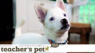 Potty Training a Puppy | Teacher's Pet With Victoria Stilwell
