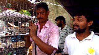PRICE UPDATE OF BIRD AT GALIFF STREET PET MARKET KOLKATA INDIA | 16TH JUNE 2019 VISIT