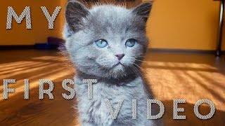 My First Video | Funny cats