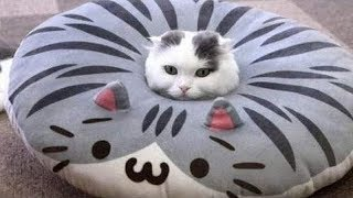 Cute Cats Doing Funny Things Compilation