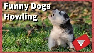 Funny Dogs Howling [Make Your Dogs Howl] (TOP 10 VIDEOS)