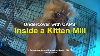 Undercover with CAPS: Inside a Kitten Mill