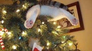 Funny Cats vs Christmas Trees – Funny Cats Christmas Compilation –  part 2