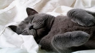 Funny Cats Sleeping – Funny Cute Cats Compilation – Sleeping Cats Part 3