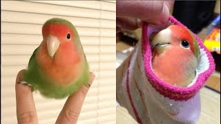 Funny Parrots Videos Compilation cute moment of the animals – Cutest Parrots #3