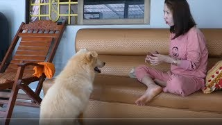 LOVELY SMART GIRL PLAYING BABY CUTE DOGS AT HOME HOW TO PLAY WITH DOG & FEED BABY DOGS #4