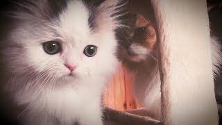 MILO and OTIS – Cute Cats Playing and Fighting!