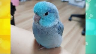 Cute Is Not Enough 🔴 Funny and Cute Parrots Videos Compilation #9
