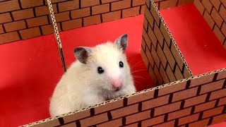 My Funny Pet Hamster in 6-Level Unique Maze