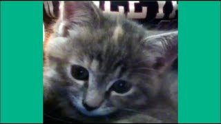 cute cats and kittens vine videos compilation – Best Videos on Vine