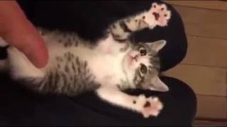 Funny Cat Videos – Surprised Baby Kittens – Cute Kittens Compilation 2016
