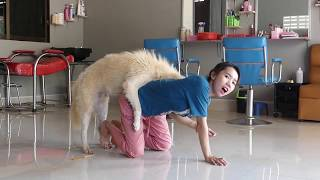 LOVELY SMART GIRL PLAYING BABY CUTE DOGS ON RICE FIELDS HOW TO PLAY WITH DOG & FEED BABY DOGS #`105