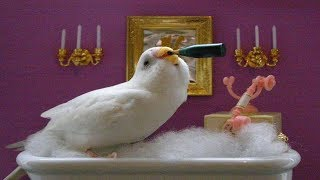 Cute Birds Doing FUNNY Stuff When Bath! Cutest & Naughty Birds In The World 2019