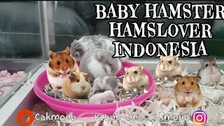 Funny Hamsters Videos | Cute And Funniest Hamster