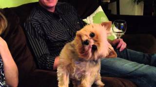 Cute Dog – Turns head for Thanksgiving