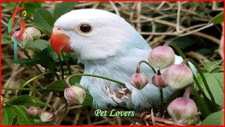 Cute Birds Doing FUNNY Stuff ! Cute birds funny Videos and Vines Compilation #03