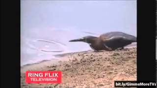 Top Funny Birds Video Compilation