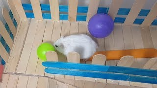 My Funny Pet Hamster Tory in Square Maze