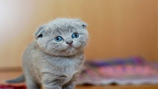 Funny And Cute 😻 Cats Compilation 2019 ❤️