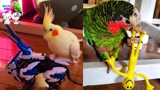 Funny and Cute Parrots Videos