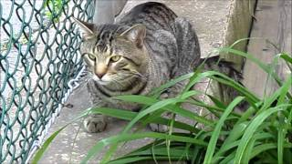 Cute Cats Enjoying the Garden – Vlog of Randomness #30