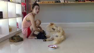 LOVELY SMART GIRL PLAYING BABY CUTE DOGS AT HOME HOW TO PLAY WITH DOG & FEED BABY DOGS #67