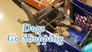 Super Cute Dogs Go Shopping