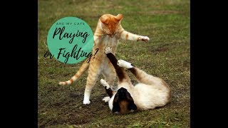 Cat Play vs. Cat Fight & How to Tell the Difference – Cute Cats Playing Together! – Cats and Cat Nip