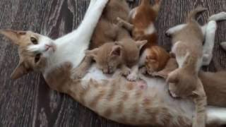 Mommy cat feeding hungry cute kittens, nursing mama