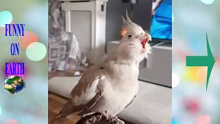 Funny bird Videos Cute Moment | funny videos for kids #1