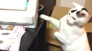 Ultimate Funny Cats Vs. Printers Compilation 2014 [NEW]
