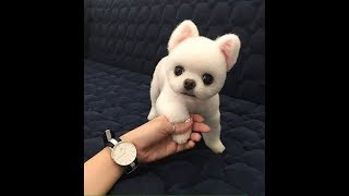 ♥Cute Dogs and Cats Doing Funny Things 2018♥ #82 – CuteVN