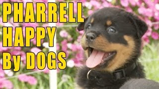 Pharrell – Happy (Puppy & Doggy Version)