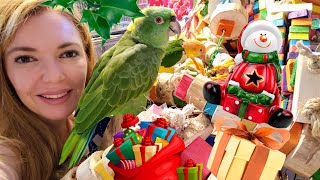 My Parrots Opening Their Christmas Presents   Cute Bird Video