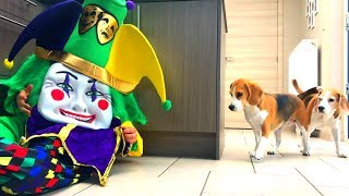 Dogs Vs Clown Prank  : Funny Dogs Louie and Marie