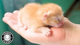 Kittens 🔴 Funny and Cute Baby Cat Videos Compilation (2019) Gatitos Bebes Video Recopilacion
