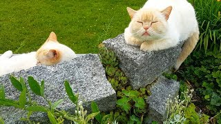 Odin and Oscar, my cute cats are relaxing in the garden