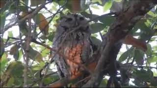 Beautiful Cute Owl Birds Doing Funny Things When Talking to Each Other