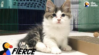 Fuzzy Kittens Help Each Other Learn To Walk  | The Dodo Little But Fierce