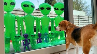 Dogs get Alien Invasion Party : Funny Dogs Louie and Marie