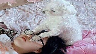 Funny Dogs  🐶 Cute and Funny Dogs and Cats Videos Compilation (2018) #2