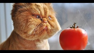 Funny Cats Videos Compilation 2019
