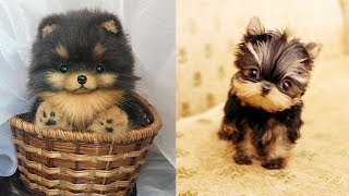 Cutest Puppies in the World Video Compilation
