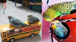 Wanna Laugh! This Funny & Cute Tame Birds will Not Disappointing You! – Funniest Tame Birds video