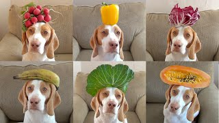 100 Fruits & Vegetables on Dog's Head in 100 Seconds: Cute Dog Maymo